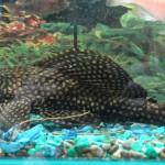 Большое разнообразие пресноводных рыб, аквариумов и средств по уходу за ними