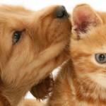 Дирофиляриоз животных