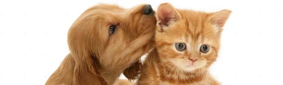Рекомендации при заведении щенка или котенка