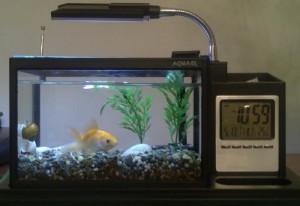 аквариум aquame